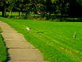 Sandhill Cranes in Vilas Park - panoramio.jpg