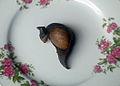 Sapu mhicha leaf tripe.jpg
