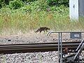 Sarreguemines station cat 2016.jpg