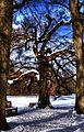 Schlosspark Nymphenburg, Baum am Badesee *HDRI* (8506534597).jpg
