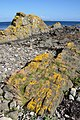 Scotland, Isle of Arran, Kildonan, Dykes.JPG