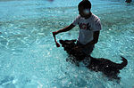 Security Forces conducts K-9 water training 130910-F-SY464-033.jpg
