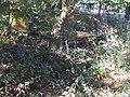 Seebach Leihgraben andererer Straßengraben beim Parkplatz.jpg