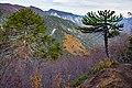 Sendero Sierra Nevada.jpg