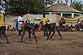 Senegalese lutter 2.jpg