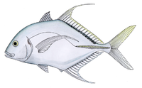Shadow trevally