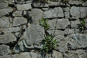 Sheela na gig - Sheela na gig on town wall in Fethard, County Tipperary, Ireland