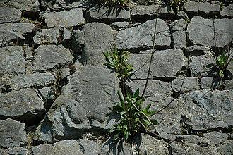 Sheela na gig - Sheela na gig on town wall in Fethard, County Tipperary, Ireland