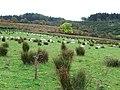 Sheep pasture - geograph.org.uk - 581444.jpg