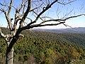 Shenandoah Trees.jpg