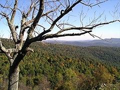240px Shenandoah Trees