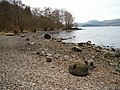Shores of Loch Awe - geograph.org.uk - 102400.jpg