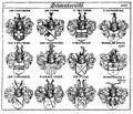 Siebmacher 1701-1705 E207.jpg