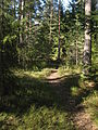 Skogsstig Satava vår.jpg