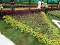 Snap from Lalbagh Flower Show Aug 2013 8356.JPG