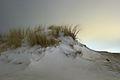 Sneeuwduinen in Hoek van Holland (4260722220) (2).jpg