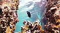 Snorkeling Front Porch, Bonaire (12841265724).jpg