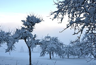 Classifications of snow - Snow accumulation on ground and in tree branches in Germany