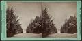 Snow view near Lakewood, by Smith, Washington G., 1828-1893.png