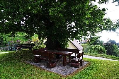 Sommer-Linde in Gossen-Knappenberg, Gemeinde Hüttenberg, Bezirk St. Veit an der Glan, Kärnten.jpg