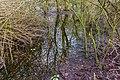 Spiegeling in water van moeras. Locatie, natuurgebied Delleboersterheide – Catspoele.jpg