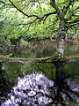 Spring flooding alongside Ober Water, New Forest - geograph.org.uk - 172469.jpg