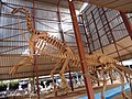 Squelette d'un dinosaure au musée national au Niger.jpg