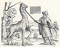 Stör, Niklas Giraffe.jpg