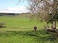 St Oswald's Way, Little Bavington - geograph.org.uk - 1274101.jpg