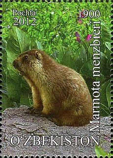 Menzbiers marmot Species of rodent