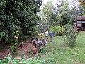 Starr-120614-7440-Litchi chinensis-habit with Monroe Keenan and Kim-Makawao-Maui (26487078427).jpg