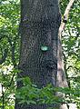 Sternwarte Baum 296.jpg