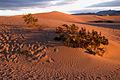 Stovepipe Wells - Dunes at Sunrise (3812550038).jpg