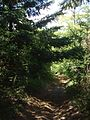 Strada che attraversa la sommità del monte Camurcina - panoramio.jpg