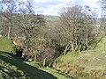 Stream Valley near Gwern-brain-uchaf - geograph.org.uk - 354061.jpg