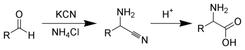 Strecker Amino Acid Synthesis Scheme.png