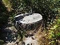 Stump near former Elwa Reservoir (29515418773).jpg