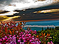 Summer-sunrise-mountain-flowers - Virginia - ForestWander.jpg