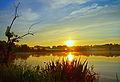 Sun above the horizon reflected in serene pond.jpg