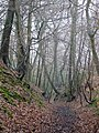 Sunken lane, Quarry Wood - geograph.org.uk - 1737244.jpg