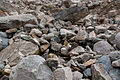 Svaneti Rocks near Chalati Glacier-Uolos prie Chalati ledyno (3871660209).jpg