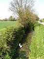 Swans on Bottisham Lode - geograph.org.uk - 1264887.jpg