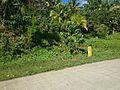 Talaingod-San Fernando Road - panoramio (99).jpg
