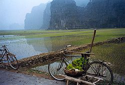Rice paddies in a karst landscape, Tam Cốc.