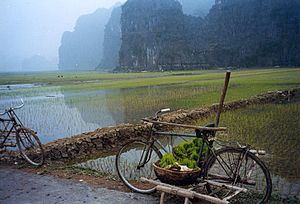 Rice paddies in a karst landscape, Tam Cốc village, Ninh Hải commune, Hoa Lư District, Ninh Bình Province, Vietnam