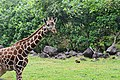 Taman Safari Prigen, Jawa Timur.jpg