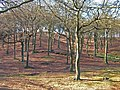 Tandle Hill Country Park - geograph.org.uk - 330188.jpg