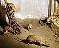 Taxidermied rats.jpg