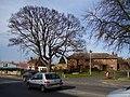 Tennyson Avenue, Sleaford - geograph.org.uk - 360349.jpg