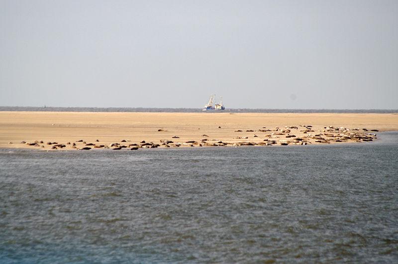 Seehunde beim Sonnenbad auf einer Sandbank im UNESCO-Weltnaturerbe Wattenmeer